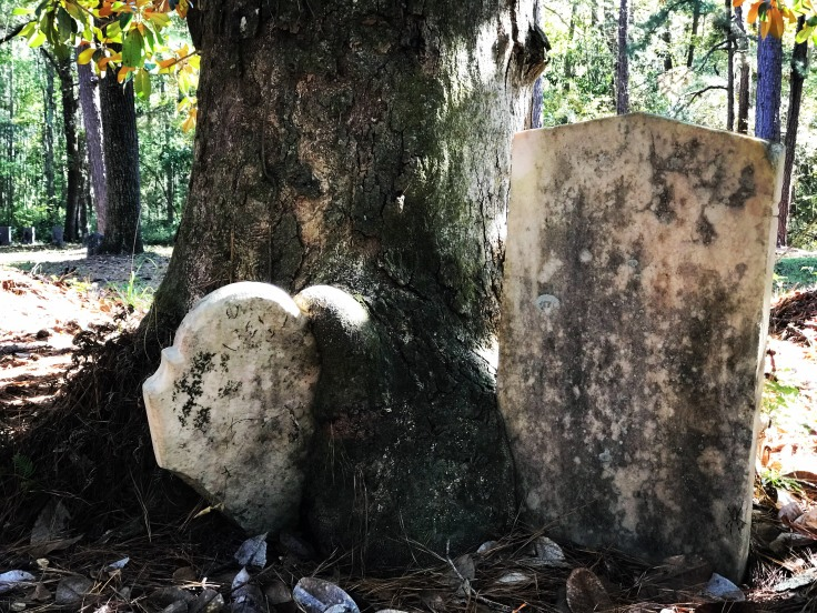 Tree and Gravestone.JPG