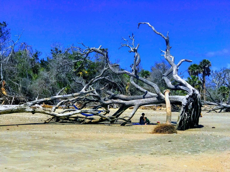 Fallen Tree for Shade at Botany Bay Beach.jpg